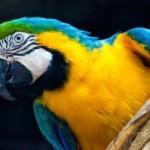 Investice do zoologické zahrady
